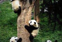 ...Hug a Panda..