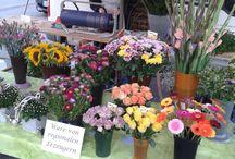 Wochenmarkt 31.07.2015 / Unser Blumenstand auf dem Edigheimer Wochenmarkt am 31.07.2015