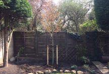 Garden Trees / trees for gardens