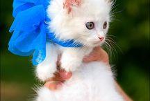 pisi cute