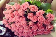 ♡ Roses ♡