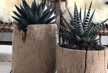 vasi e piante grasse