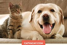 Pet Sitter Services