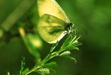 Bold Butterflies / by Valerie Berstecher