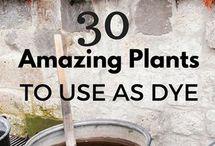 dye using plants