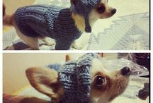 Knitting for pets