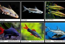 Akvarier og Fisk.  Utstyr og Pumper.