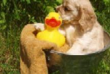 Puppy Love / by Amanda Gomez