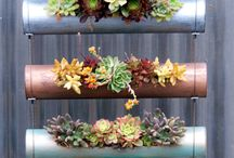 Carolkeep@gmail.com  Hanging succulents