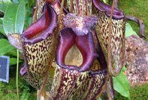 Orquídeas raras-exoticas