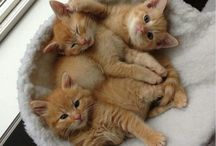 Anak kucinglucu