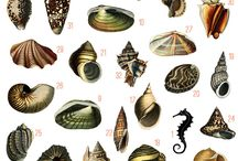 crustacee