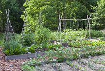 gardens / by Dee Dee Dillinger
