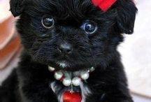 so cute!! / by Jennifer Diehl-Deppe