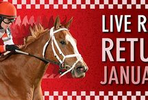 Free Tickets / Free tickets for #livehorseracing at Sam Houston Race Park for our residents, just call to get  yours.