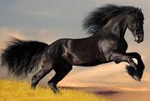 Fotografias de cavalos