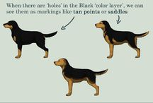 dog genetics