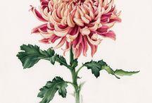 цветы в ботанической акварели