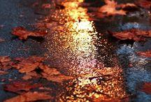 Autumn charm