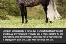 Horse Colouring
