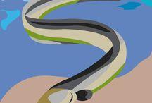 PESCI DELL'ADRIATICO / Tecniche grafiche pittoriali, stilizzazione e pittogramma - classe 3A liceo artistico - indirizzo grafica - Discipline Grafiche