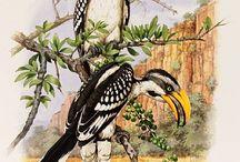 Natural History Ilustrations