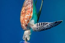 SEA ANIMALS / Some BEAUTIFUL animals from the sea