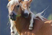 paarden>3