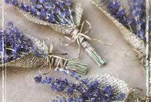 Lavender road trip / Our lavender road journey province 2015 july