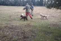 """An afternoon looking for Truffle in Grignan / We went truffle """"hunting"""" with Milie the dog, what a treat ! We had so much much !"""