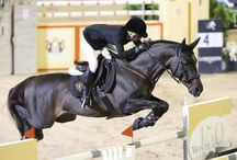 Equine Athletes