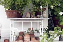 Pots in cottage gardens
