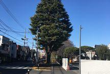 東京近郊 Tokyo and environs