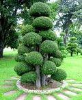 Strihanie stromov.
