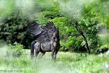 Belgie / Paarden