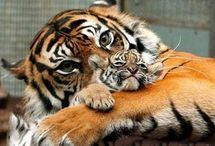 Mummy Moments / A Mother's look, a Mother's love, a Mother's tender touch.......precious moments captured with Mother's from the animal kingdom with their young / by Julie
