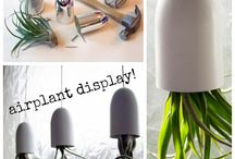 bathroom air plants / by Christine Yen