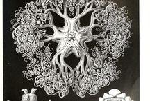 litografie - tisk