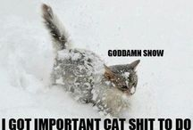 Cat Stuff Too... / Cute/funny pics and gifts for cat lovers.