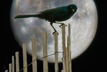 """""""Fly me to the Moon""""!"""
