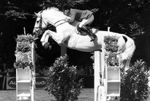 Equestrian nostalgia / A look back at equestrian stars of yesteryear from the Horse & Hound archives