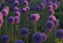 Planten ideeën tuin