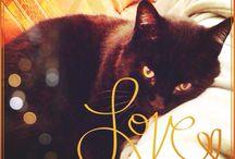 Gatti / I gatti che incontro sulla mia strada. Prandy naturalmente è il principe incontrastato dell'album (o si offende e non mi fa più le fusa!)