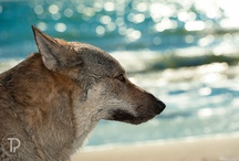 Canids / Canids
