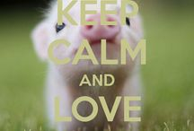 KT piglets