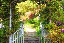 Through the Garden Gate / by Terri Rothrock
