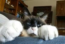 grumpy cat look alike