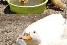 Zvieratá na farme +