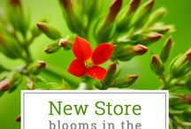 New Store Launch