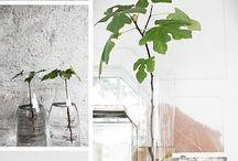 växter/blommor